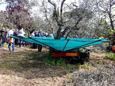 go track login ombrello per la raccolta delle olive e frutti pendenti