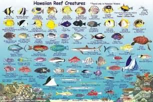 Pin Hawaii Reef Fish Chart on Pinterest