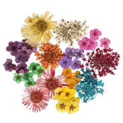 real dried flowers nail accessories 12 style sets - Dried Flowers