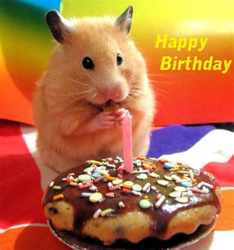 Animals Wishing Happy Birthday Happy Birthday Wishes With Animals Page 2