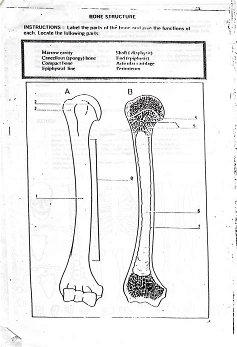anatomy coloring book skeletal system free coloring pages of human skeletal system
