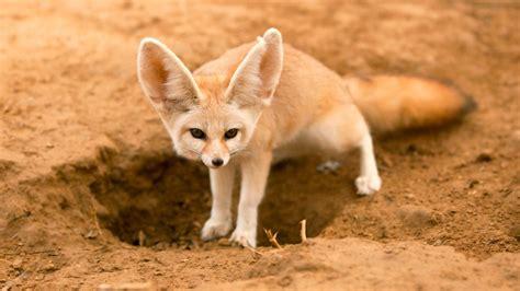 imagenes de animales del desierto los animales del desierto m 225 s raros del mundo