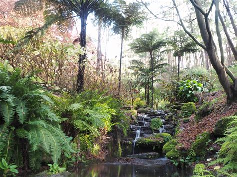 Mt Lofty Botanical Gardens 5 Things To Enjoy At Mount Lofty Botanic Garden This