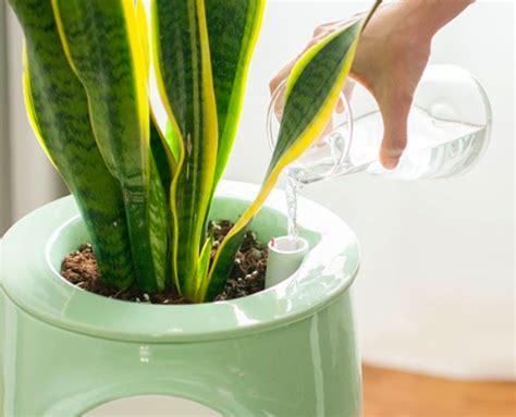 pretty natural air purifier  powered  plants