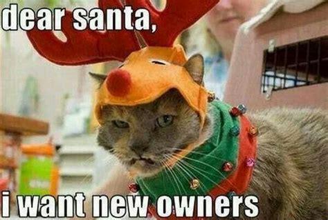 Funny Christmas Cat Memes - 15 funny christmas cats photos kitty bloger