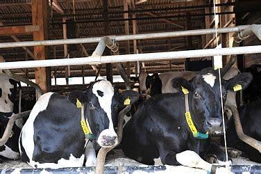 haus riswick top agrar seminar die kuh im blick stabile k 252 he mit