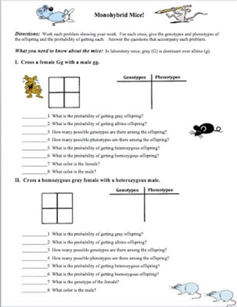 Genetic Problems Worksheet by Classroom Freebies Need An Introductory Genetics Worksheet