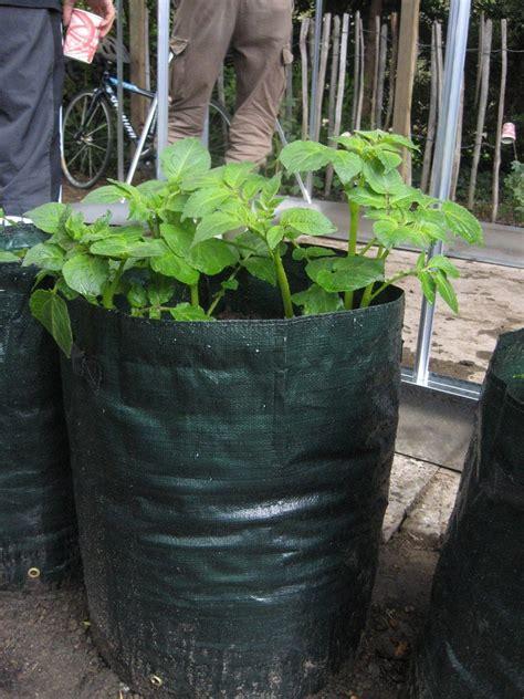 Potato Grow Bags How To Grow Potatoes In A Bag Bag Gardening Vegetables