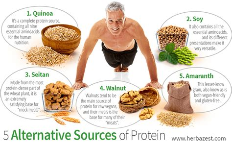sources of protein 5 alternative sources of protein herbazest