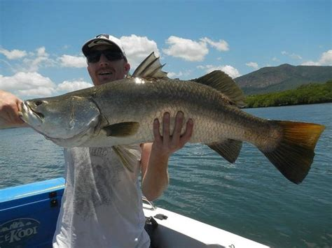 charter boat fishing townsville my 95 cm barramundi picture of fishing charters