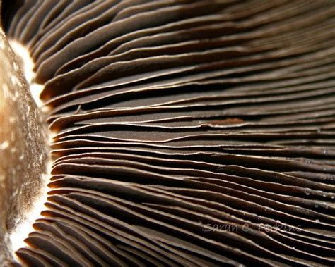 macro pattern photography abstract food photography mushroom by scperkinsphotography