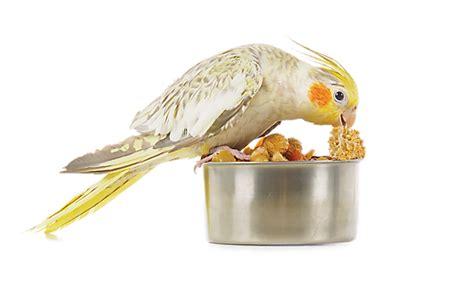 petsmart bowls bird waterers bird cage feeders petsmart