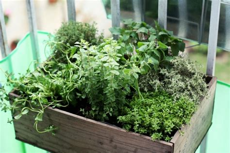 Balcony Herb Garden Ideas Ewa In The Garden 10 Beautiful Ideas For Herb Garden