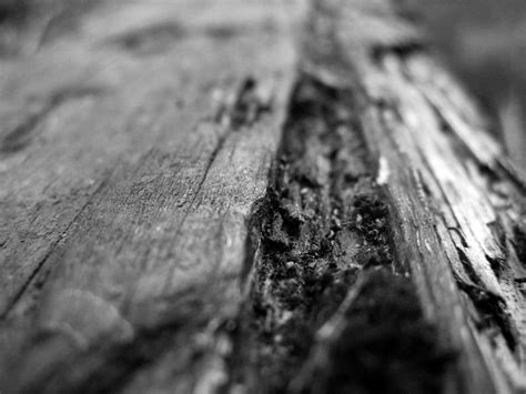 black and white woods wallpaper black and white wood grain 1 by can i keep you on deviantart