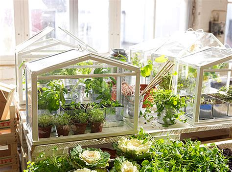 ikea indoor garden ikea s miniature greenhouse lets anyone create their own