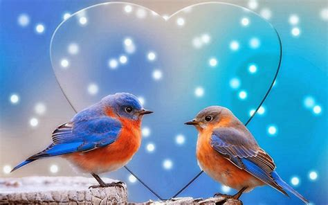 inspirements most beautiful birds of the world