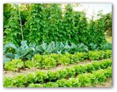 vegetable garden basics vegetable garden design garden designdesigningvegetable