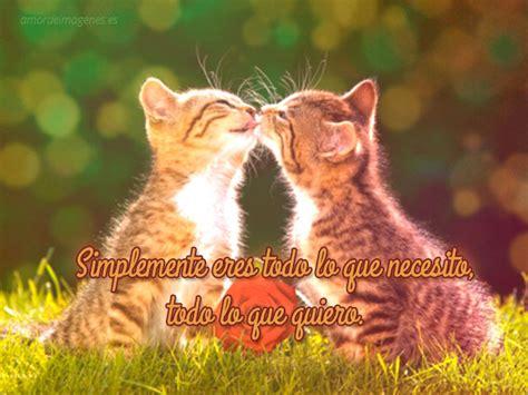 imagenes lindas de amor de gatitos im 225 genes para descargar gratis de gatitos con frases