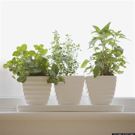 windowsill herb garden 8 ways to garden when you don t even have a backyard