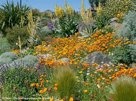 Plante Pour Jardin Sec by 40 Plantes Pour Jardins Secs Mon Jardin Ma Maison