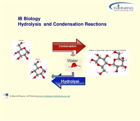 draw diagrams to illustrate condensation and hydrolysis reactions biological molecule diagram biological compounds elsavadorla