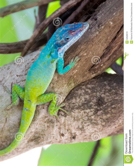 do lizards change colors image 4 of 49 interesting fact about chameleon tell