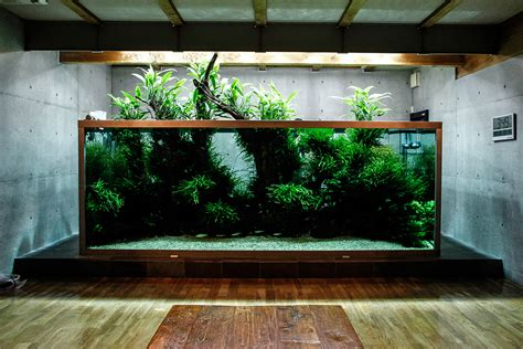 takashi amano aquascaping l aquarium particulier de takashi amano le journal de l aquascaping