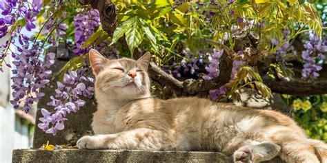 cat garden gardening tips for cat owners world s best cat