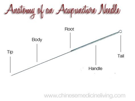 the living needle modern acupuncture technique books anatomy of an acupuncture needle