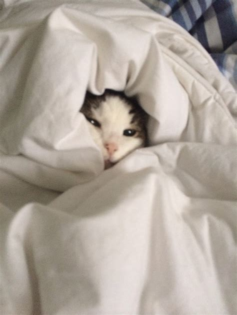 cat in bed fun and fact funny photos and happy your entire work