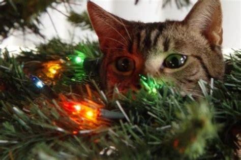 top 10 naughty tree climbing christmas cats