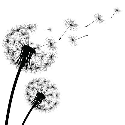 artwork clipart dandelion clip vector images illustrations istock