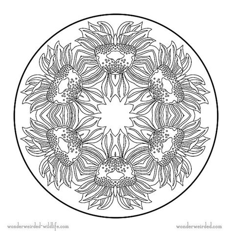 sunflower mandala coloring pages sunflower mandala coloring pages 3 flower mandala coloring