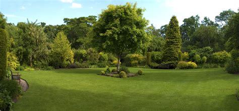 landscape trees tree work ramos landscaping