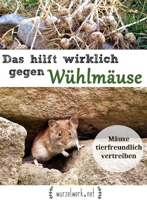 Garten Tierfreundlich Gestalten by Das Hilft Wirklich Gegen W 252 Hlm 228 Use Im Garten W 252 Hlm 228 Use