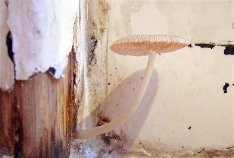 Mushrooms Growing In Bathroom by So This Was Growing In Bathroom