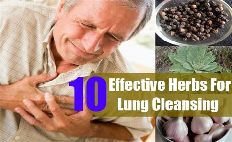 5 Herbs To Detox Lungs by 100 Best Images About Copd Help For Lou On