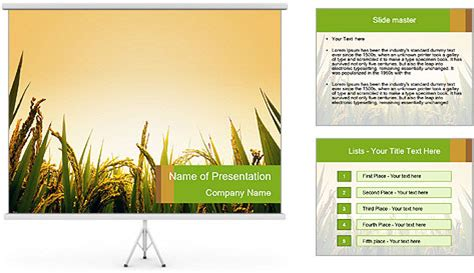 ppt templates for rice meet sunrise at rice field powerpoint template