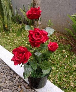 Jual Plastik Uv Bekas budidaya tanaman hias bunga mawar jual plastik uv ultra