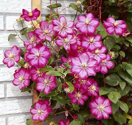 Garden Decoration Ideas climbing plants on the garden walls