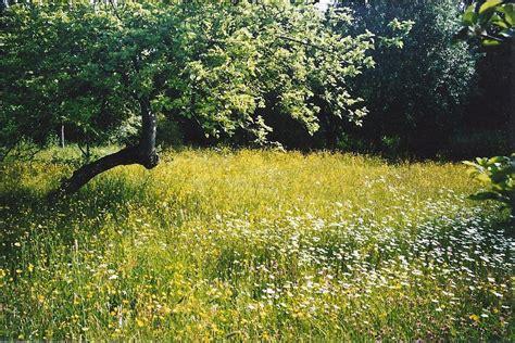 wildflower meadows gallery dean meadows group