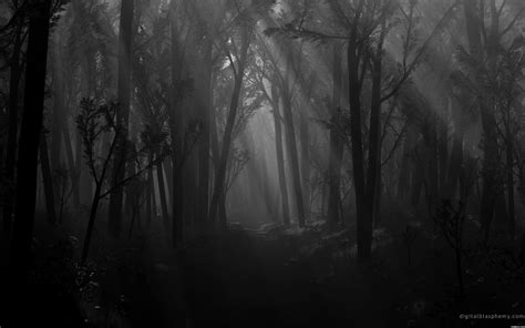 black and white woods wallpaper out of the shadows out of the shadows