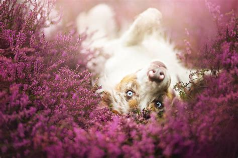 imagenes de animales felices heartwarming dog portraits by 19 year old polish