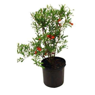 Fruit Trees Home Depot by Fruit Trees Plants Edible Garden The Home Depot