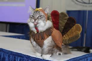 happy thanksgiving cats 4th annual akc meet the breeds world s largest