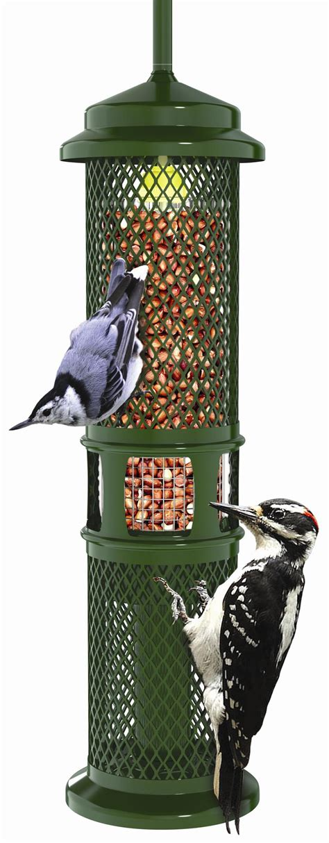 brome squirrel buster peanut bird feeder squirrel proof