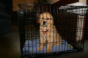 how to potty a golden retriever puppy best 25 crate ideas on