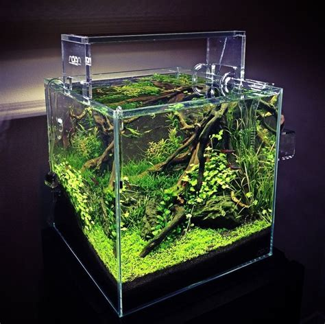 cube aquarium aquascape 17 best images about cube aquascape ideas on pinterest