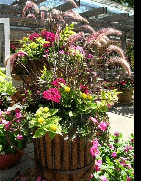 container gardens for sun containers recipes for sun containers sun loving plants