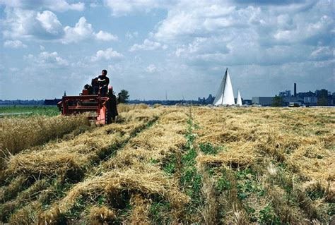 harvesting  wheatfield   heart  manhattan